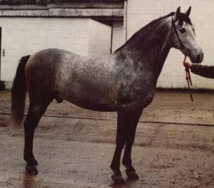 1984 - Bailor II - Nat CH Stallion 1984