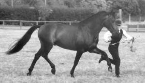 Lengueto V – Best Stallion Movement 1998