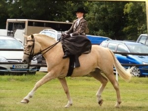 Palomares D'Oro with Michelle Enoch sidesaddle spanish tack-extended trot