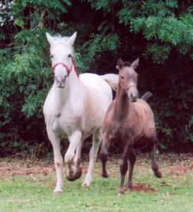 Quebra & Lucia, trot st on 07.01