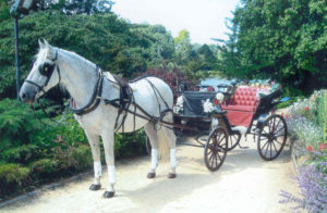 Andaluz with wedding carriage, 07.2007