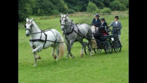 Brecknock Mercury and B Deacon in 2005 as a Tandem with Vicky Irwin driving